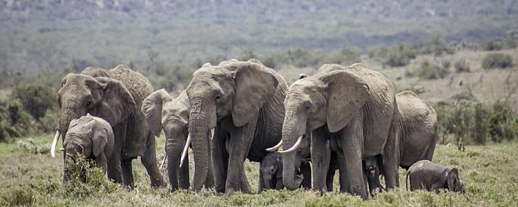 100% safari à Meru, Samburu, Ol Pejeta