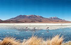 La Bolivie: Des forêts tropicales aux volcans de l\'Altiplano