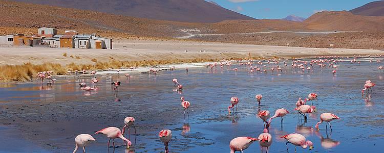 Entre Ciel et Terre: Titicaca, Lipez, Salar et Potosi