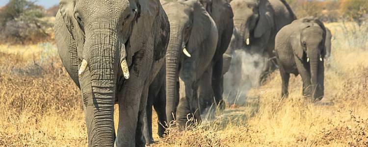 Dal Tarangire all'Ngorongoro