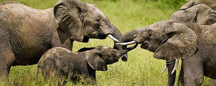 Safari classico in gruppo