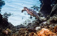 Plongée à Utila