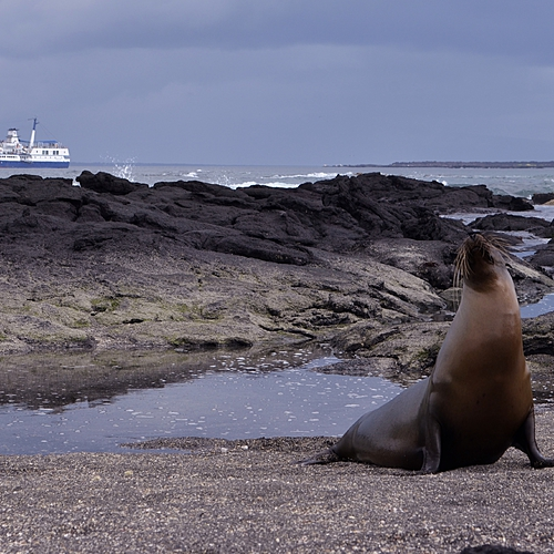 Amazonie, volcans et Galapagos en famille - Quito -