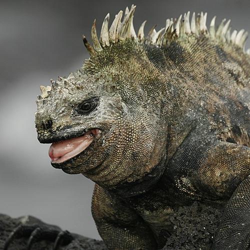 Terre de Feu et Lézards de lave aux Galapagos - Quito -