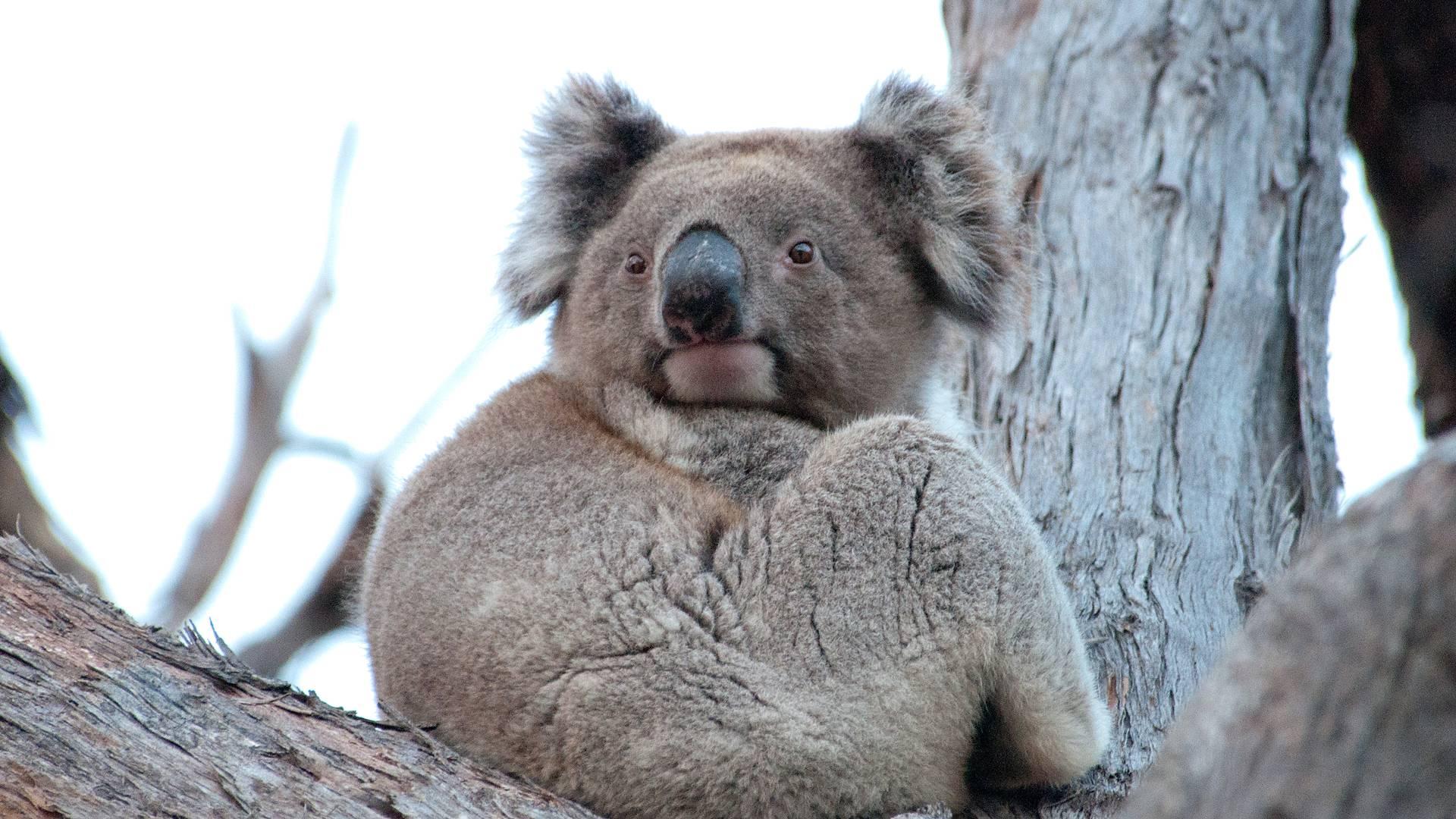 Les grands classiques: Sydney, Uluru, Kakadu et la Grande Barrière de Corail
