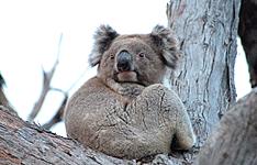 Les grands classiques: Sydney, Ayers Rock, Kakadu et Côte Est