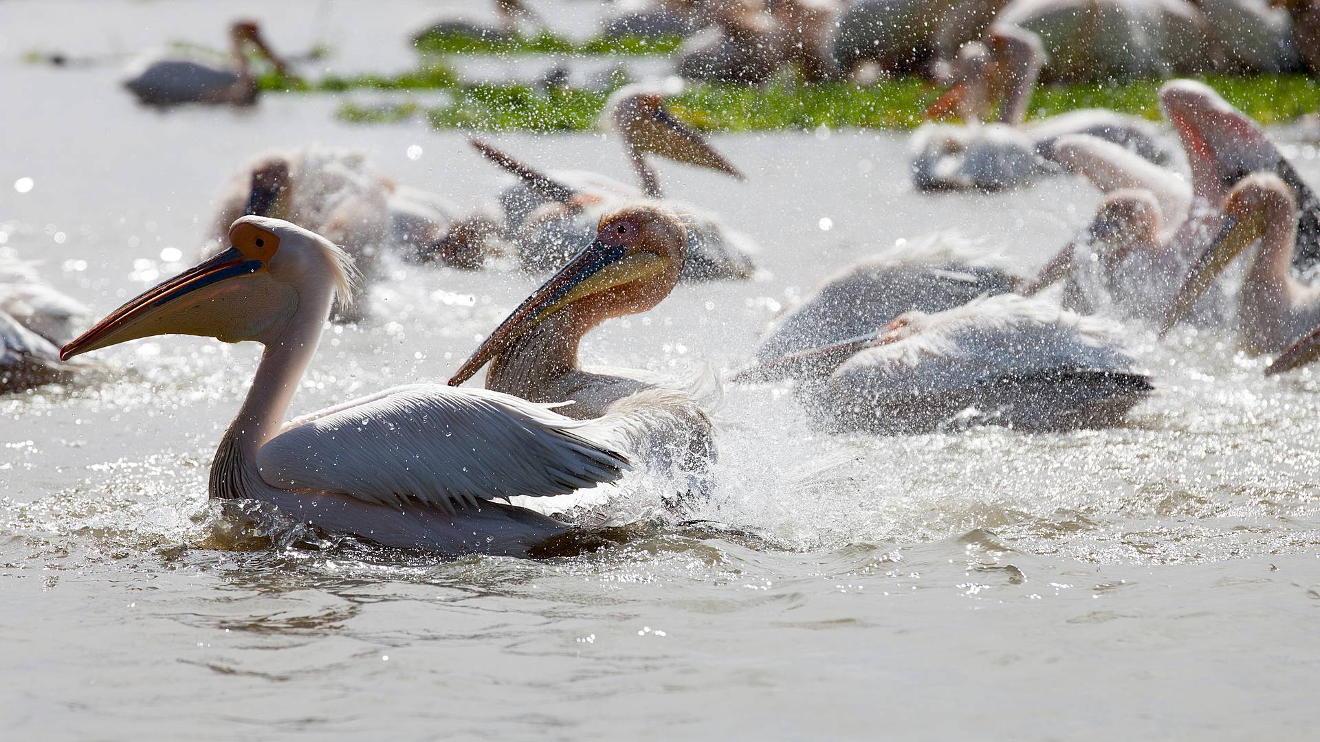 Naturaleza y aves de Senegal