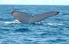 Spécial saison baleines et tortues