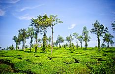 Découverte de la flore et de la faune du Sud de l\'Inde