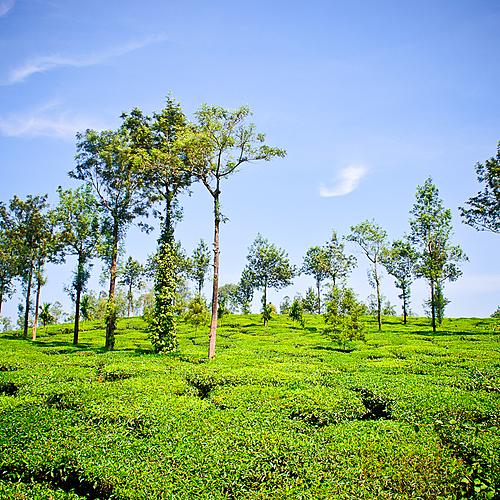 La flore et la faune du Sud - Kochi -