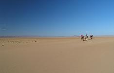 Caravane chamelière, de dunes en oasis