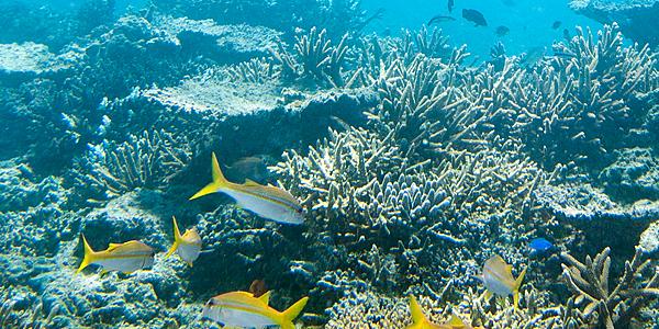La faune sous-marine des Fidji