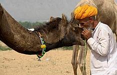 Découverte du Rajasthan et Foire de Pushkar