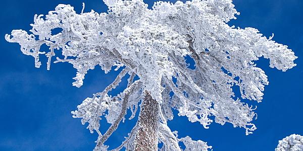 De la neige dans le massif des Troodos