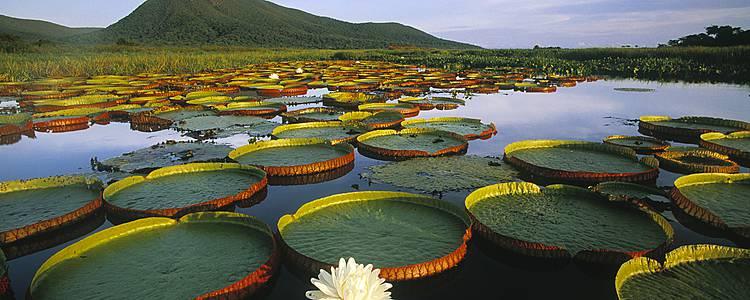 Immersione nella natura del Pantanal