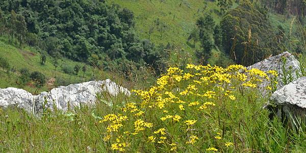 Des fleurs dans le parc de Kitulo