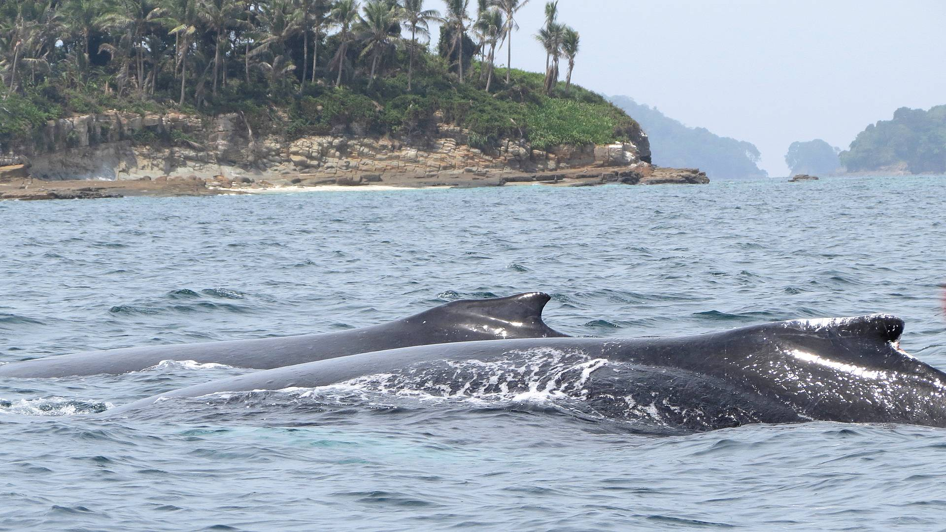 Observation de baleines aux îles Perles