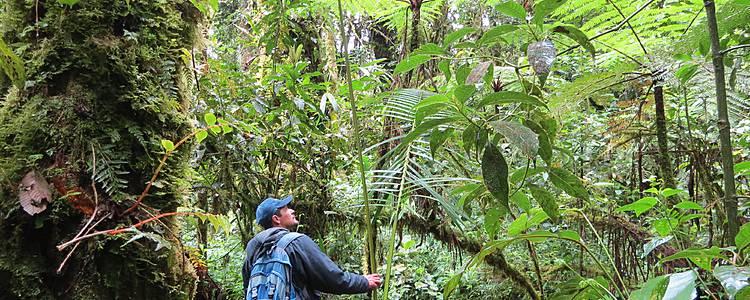 Le domaine du Quetzal