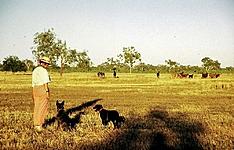 Chez les cowboys de l\'Outback