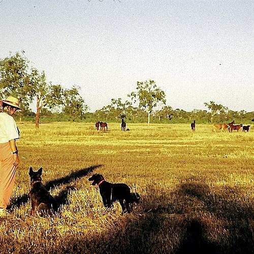Chez les cowboys de l'Outback -