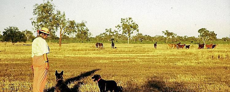 Chez les cowboys de l'Outback