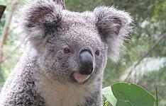 Les grands classiques de l\'Australie: Sydney, Ayers Rock, Kakadu et Côte Est