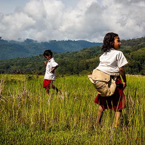 Experience du pays Toraja : Montagnes, rizières et traditions - Rantepao -