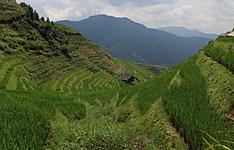 Paysages karstiques de Yangshuo et rizières en terrasses de Longji
