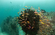 Safari et plongée, Afrique du Sud-Mozambique