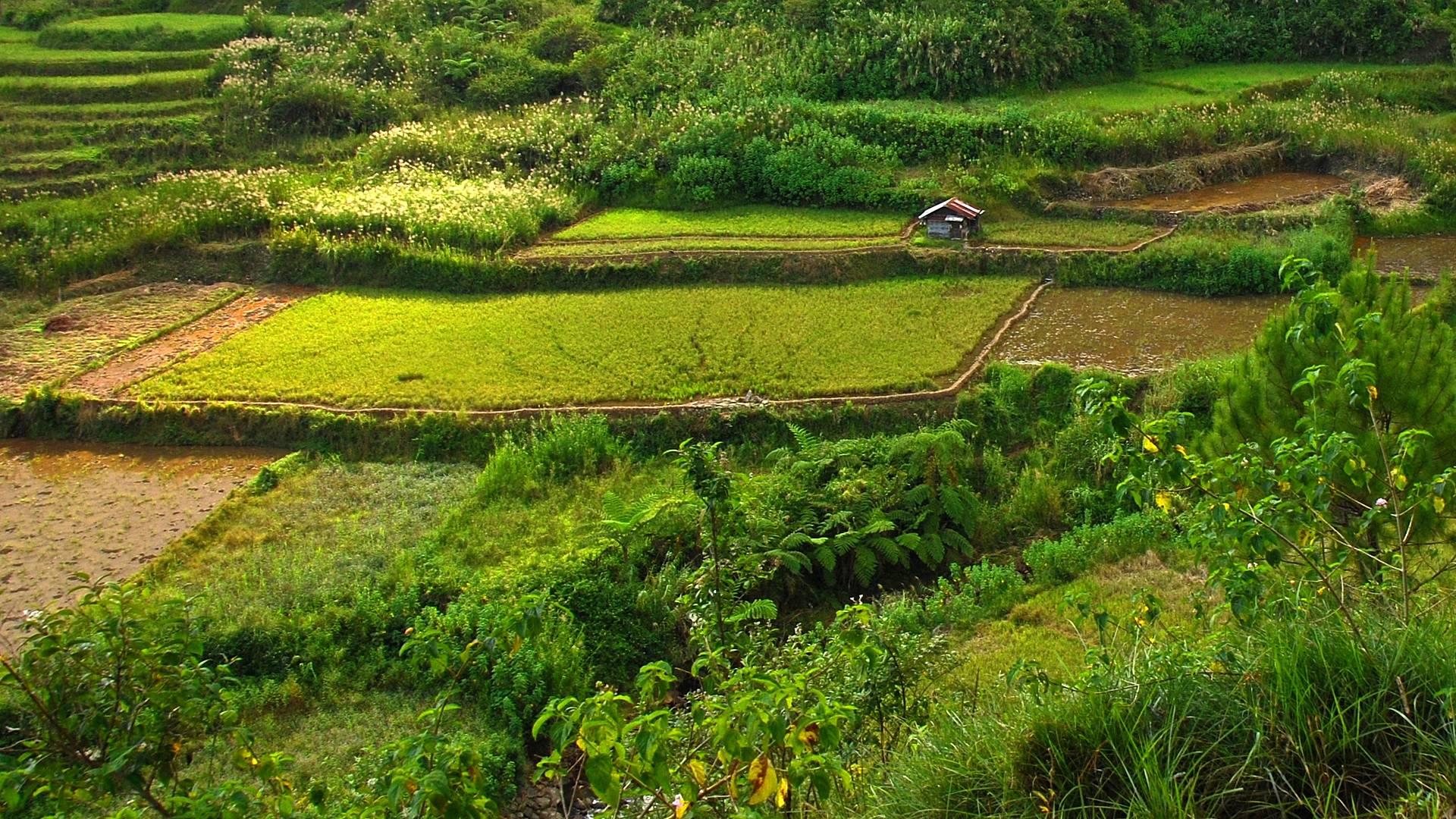 Randonnée et détente dans le Nord de l'île de Luzon