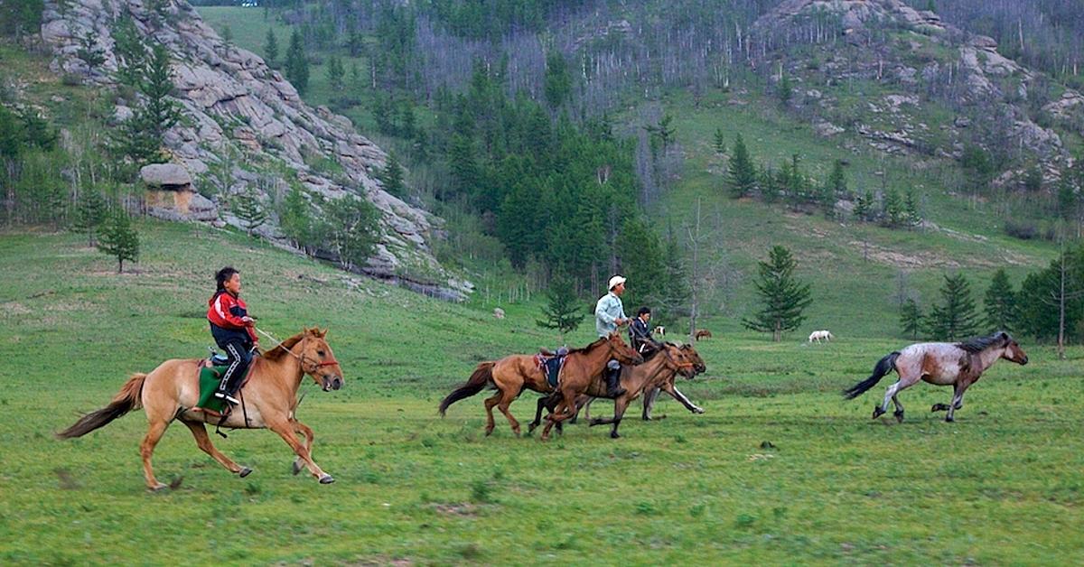 Voyage avec des animaux Mongolie : La grande chevauchée