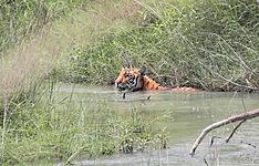 Jungle Trip : découverte de la jungle népalaise