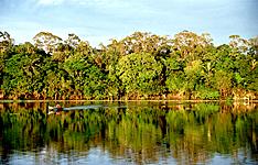 Découverte unique de l\'Amazonie
