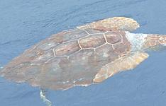 A la rencontre des baleines et des dauphins sur l\'île verte