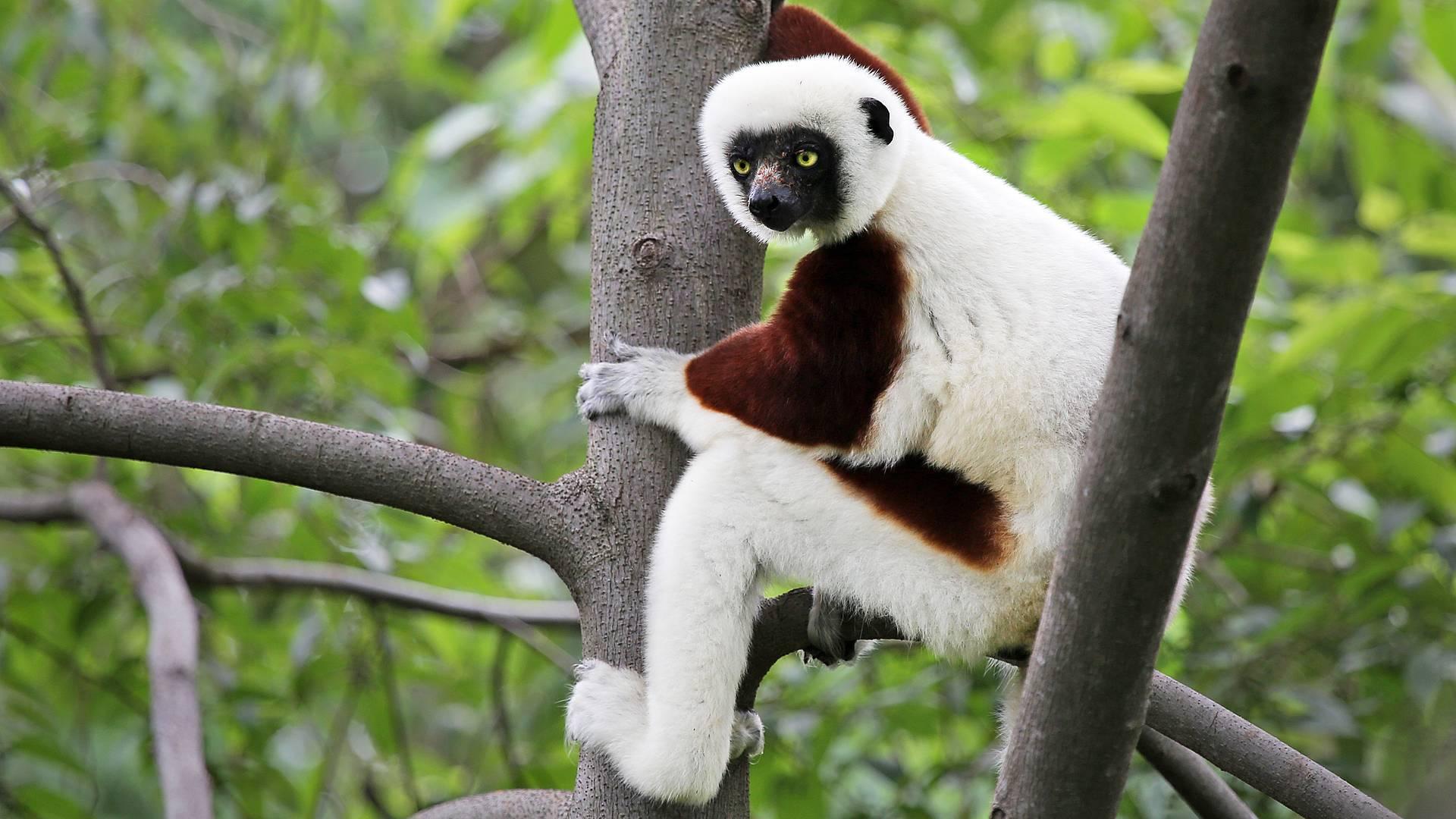 Percorsi insoliti, uccelli, lemuri e relax