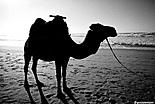Guide du Maroc