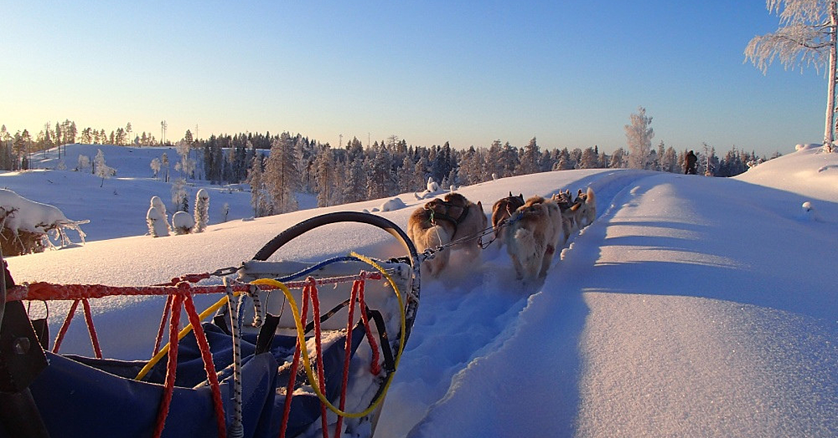 Voyage à la neige Finlande : Rêve de Taiga en traîneau à chiens, en petit groupe