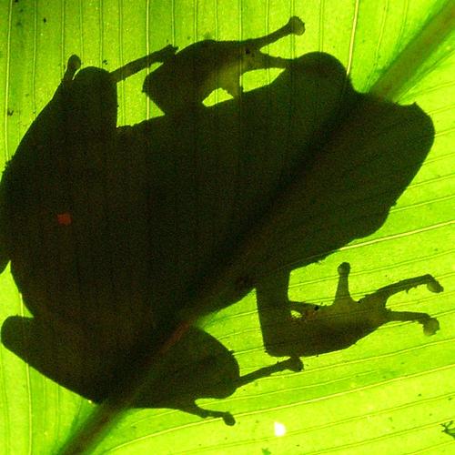 Terre de contrastes: Voyage naturaliste Galapagos et Napo Wildlife Center. -