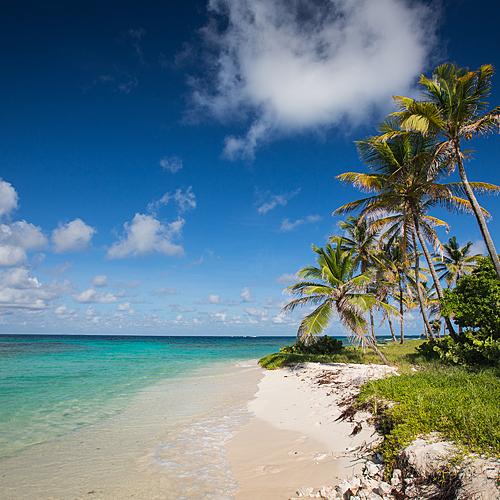 Entre terre et mer, des Salines aux Grenadines -