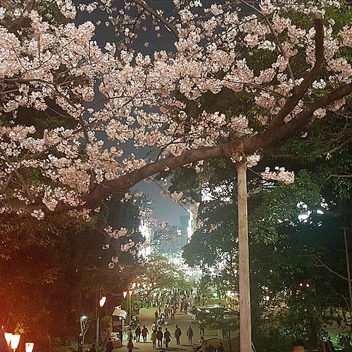 Pèlerinage fleuri et cerisiers en fleurs - Ōsaka -