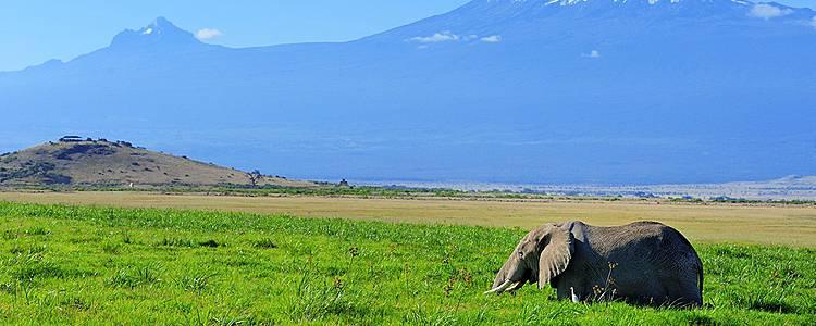 Mombassa Beach and Tsavo / Amboseli Safari