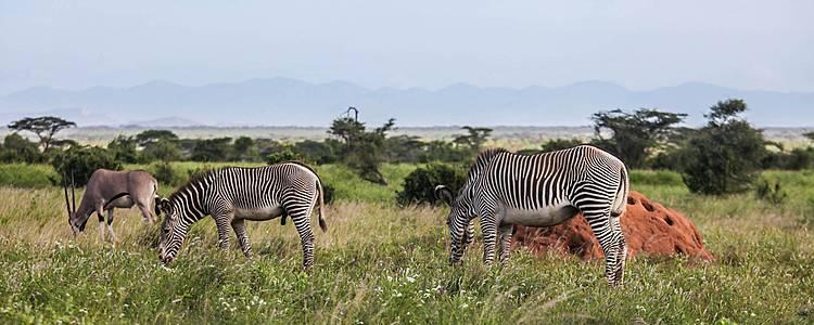 Rift Valley Lakes, Masai Mara, Diani Beach Classic