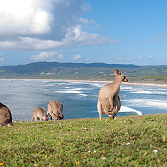 Holidays in Australia : Tailor-made tours