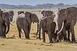Safari au Burkina Faso