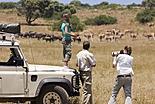 Votre safari