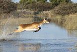 Top 10 des safaris