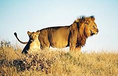 Moringa, inspiration Namibienne