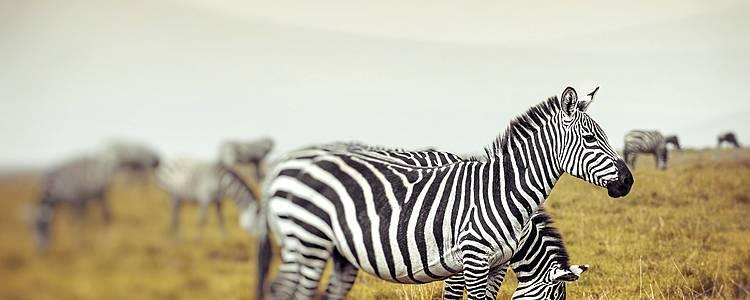 Safari por Samburu, Lago Nakuru y Masai Mara