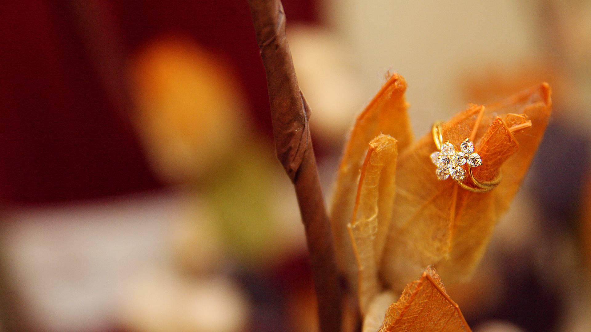 Viaggio di nozze nella terra di Sandokan