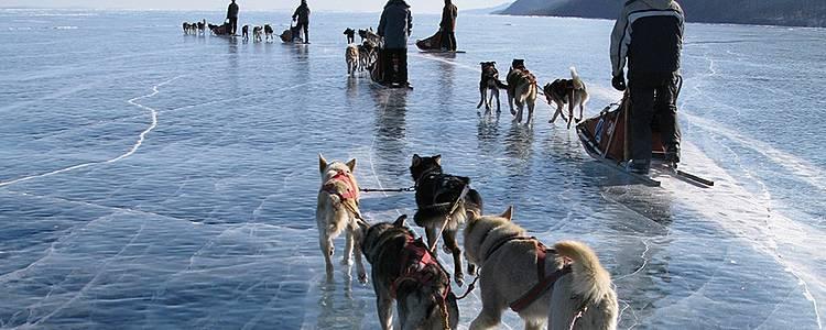 Lago Khuvsgul in slitta trainata da Husky